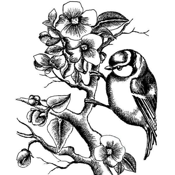 BLUEBIRD & BRANCH