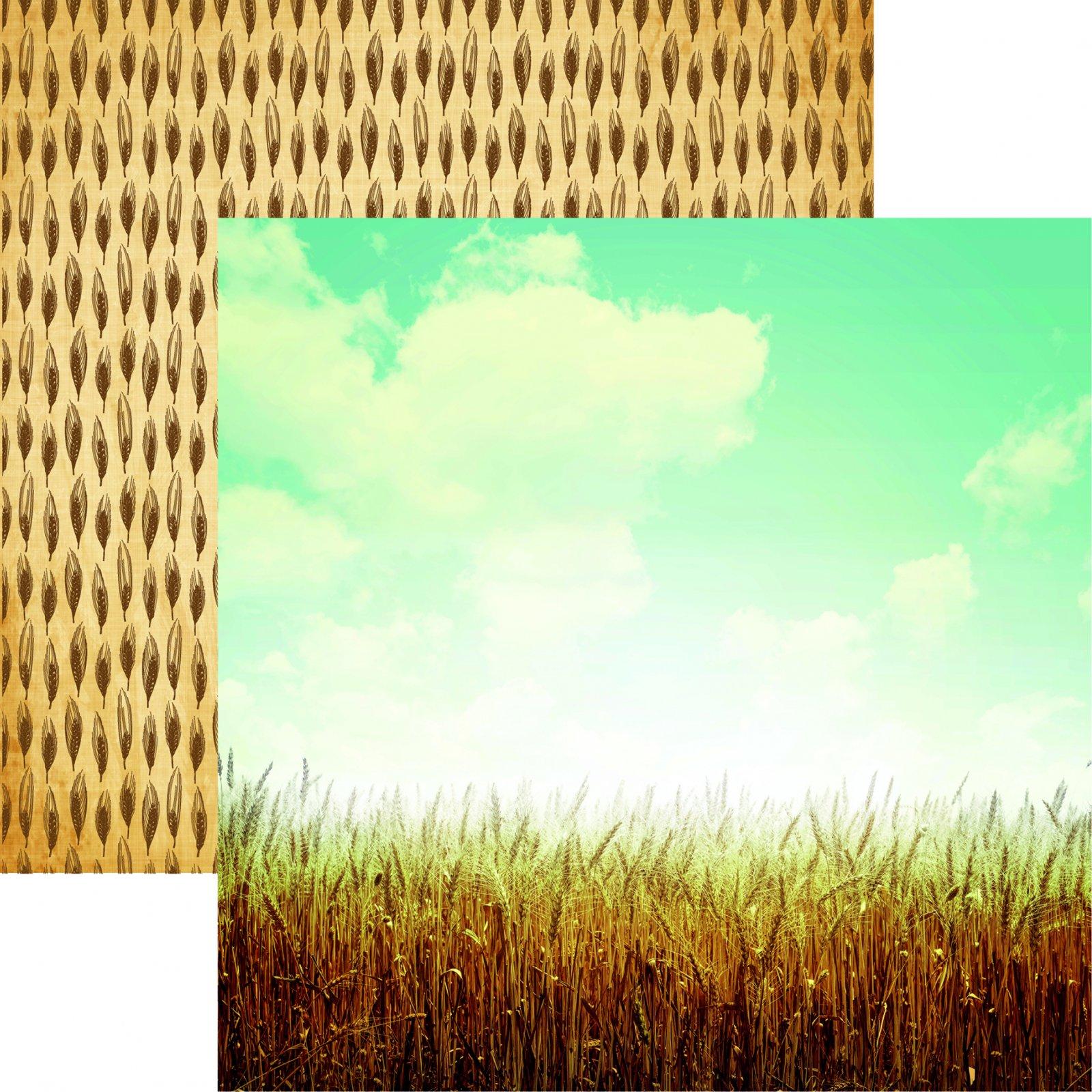 Farm Fresh Wheat Fields