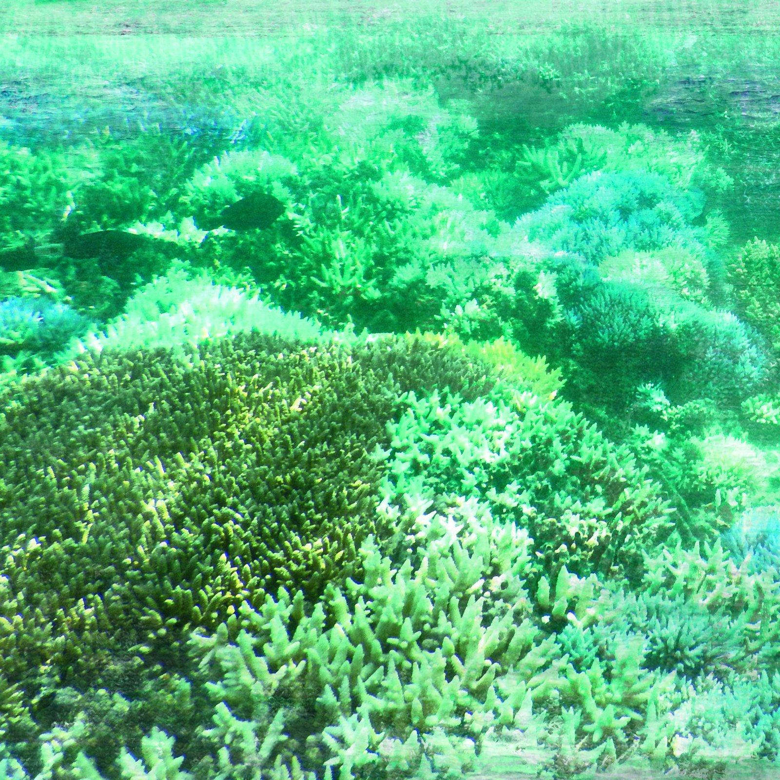 Kaiser Deep Sea Sand Bar