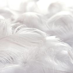 Ethereal Feathered