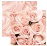 Rem Night to Remember Roses & Satin