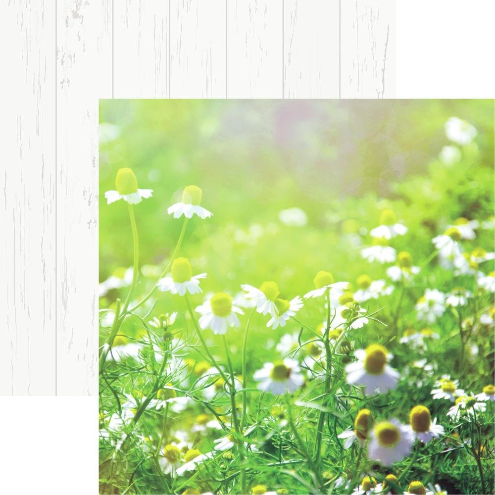 Wildflower Double-Sided Cardstock 12X12-Field Of Daisies