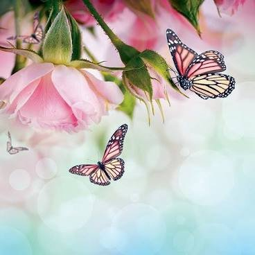 TBE Butterfly Kisses