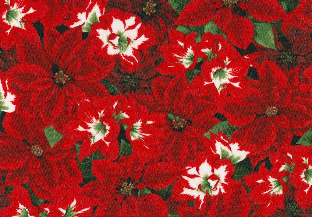 Let It Sparkle - Amaryllis Beauties - Radiant Pine
