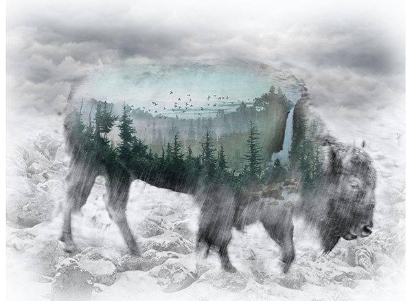 Call of the Wild Digital Prints  - Bison Panel (31 x 43) - Fog
