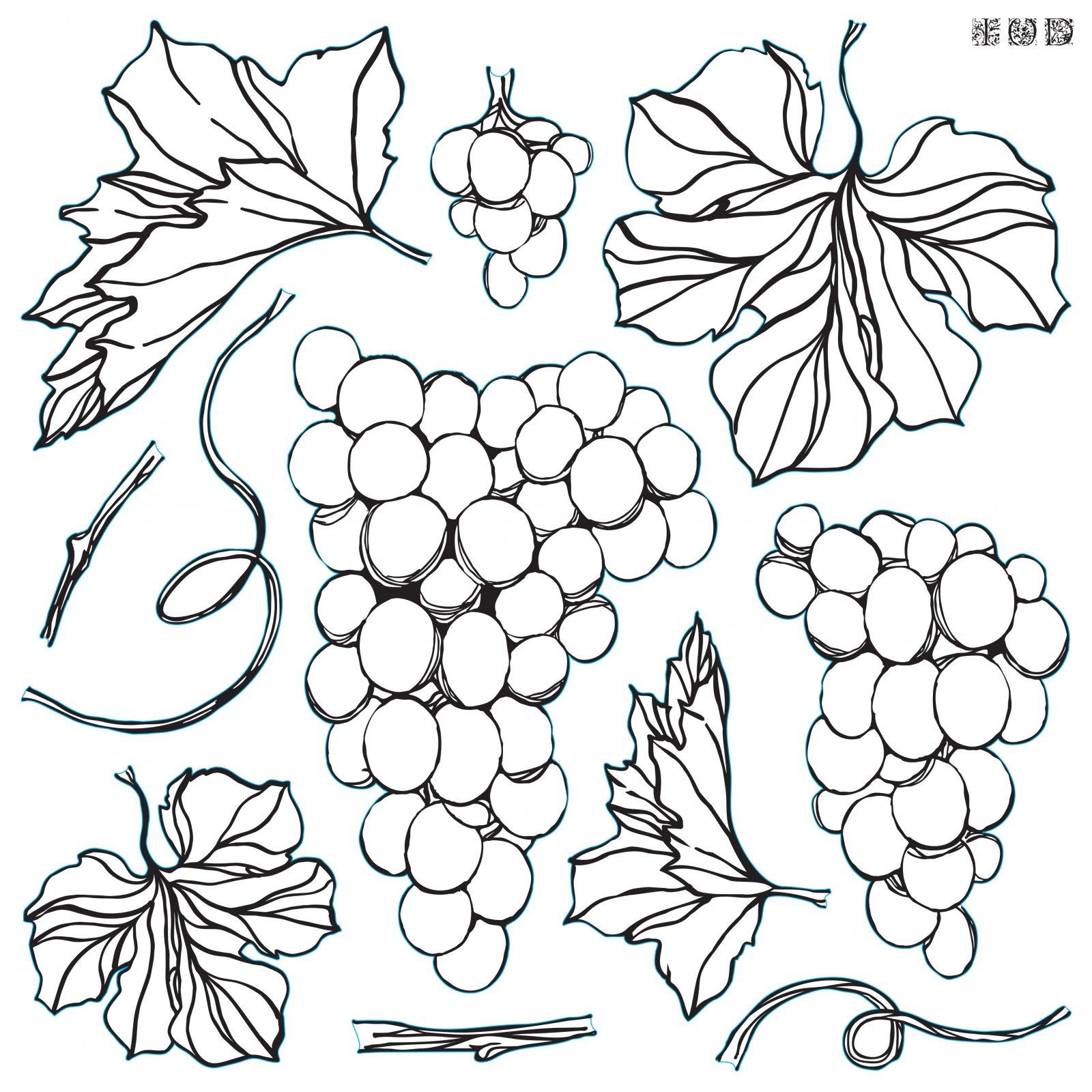 Grapes 12x12 IOD Stamp