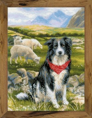 Border Collie Cross-Stitch