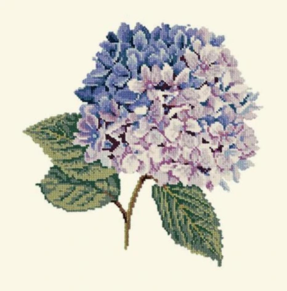 Blooms Hydrangea Kit