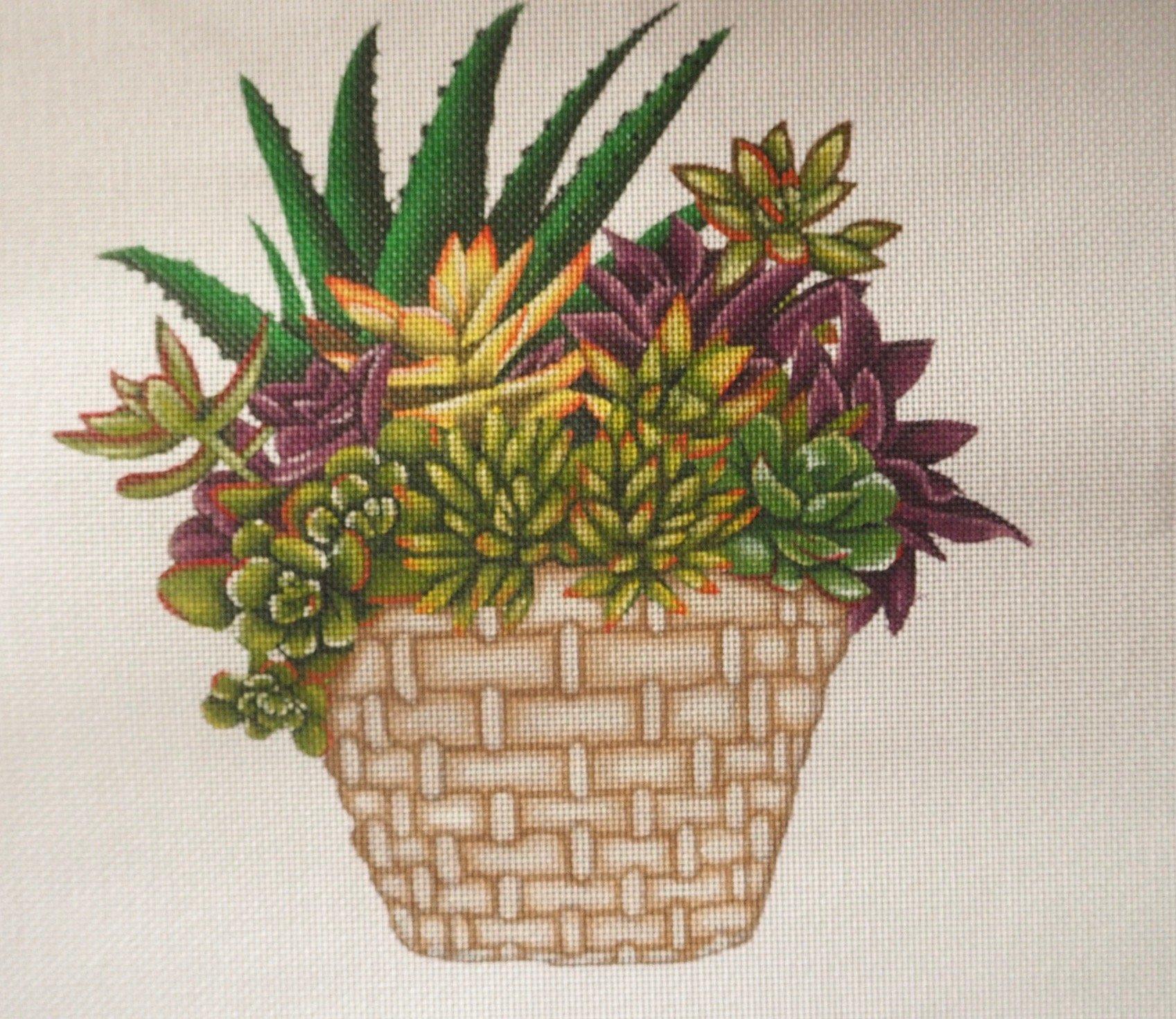 Succulents MLT261