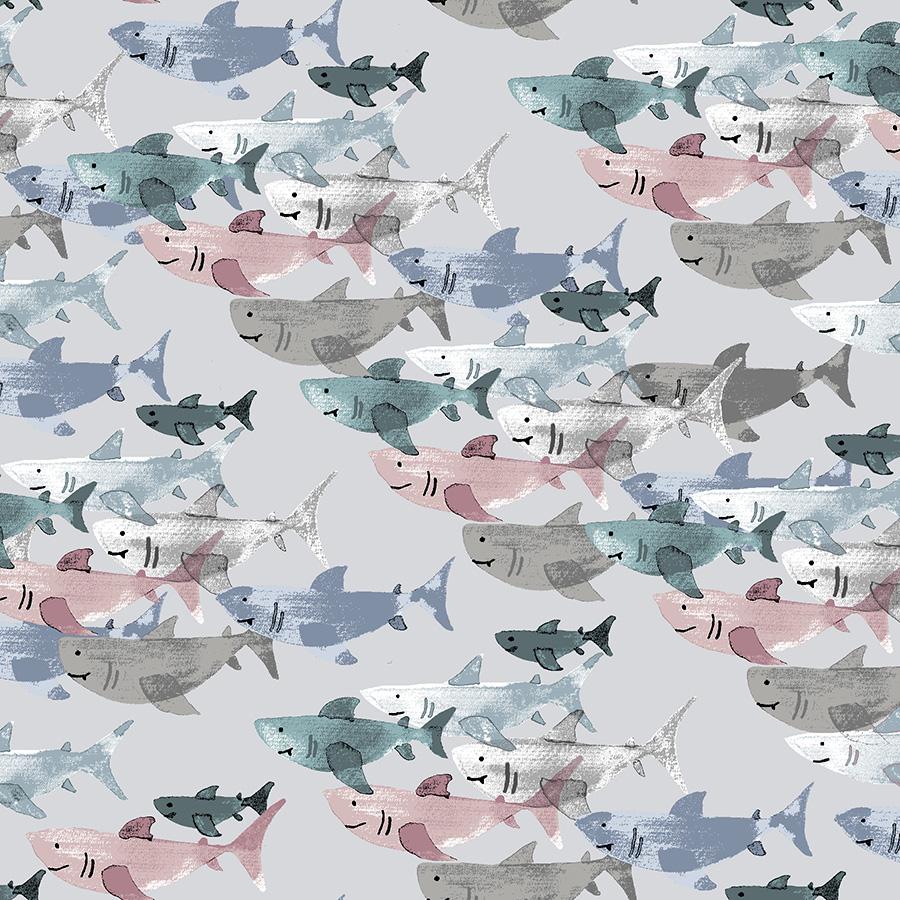 Kaikoura - Shark Frenzy - Cloud