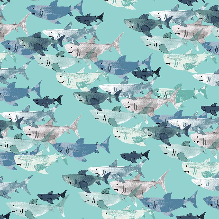 Kaikoura - Shark Frenzy - Tidepool