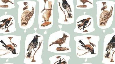 Natural History- Birds