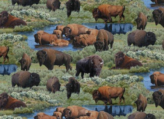 Where Buffalos Roam ES9701 GRN