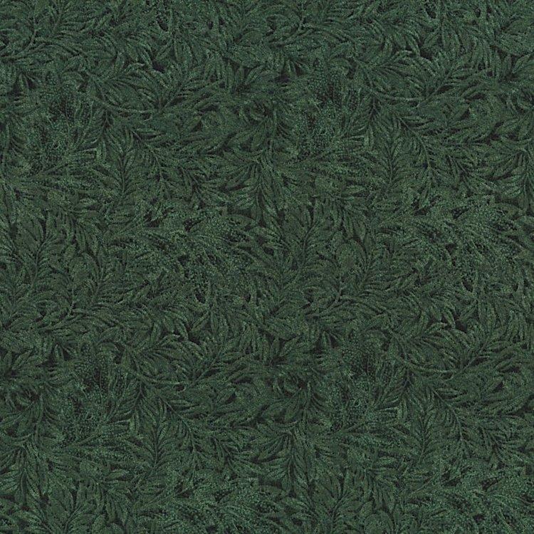 Green Fern Leaves on Dark Green
