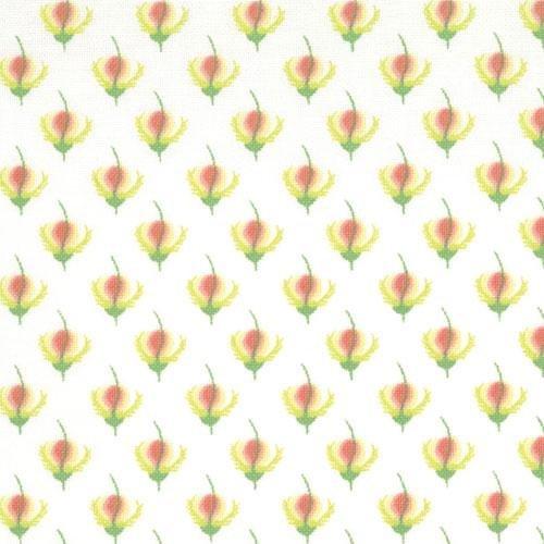Botany 25026-11