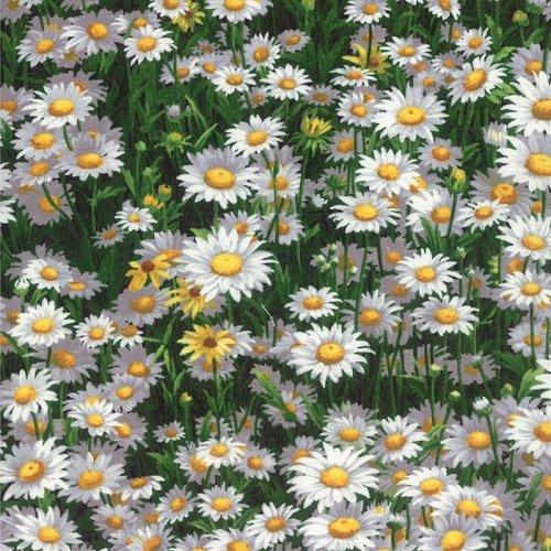 Wildflowers VI 32814-13