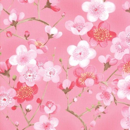 Sakura 33171-12