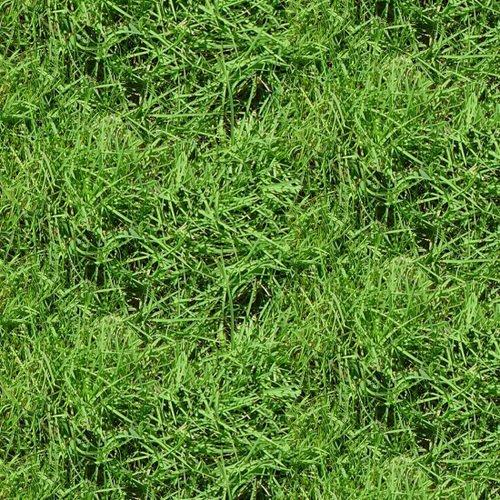 Natural Treasures II - Grass