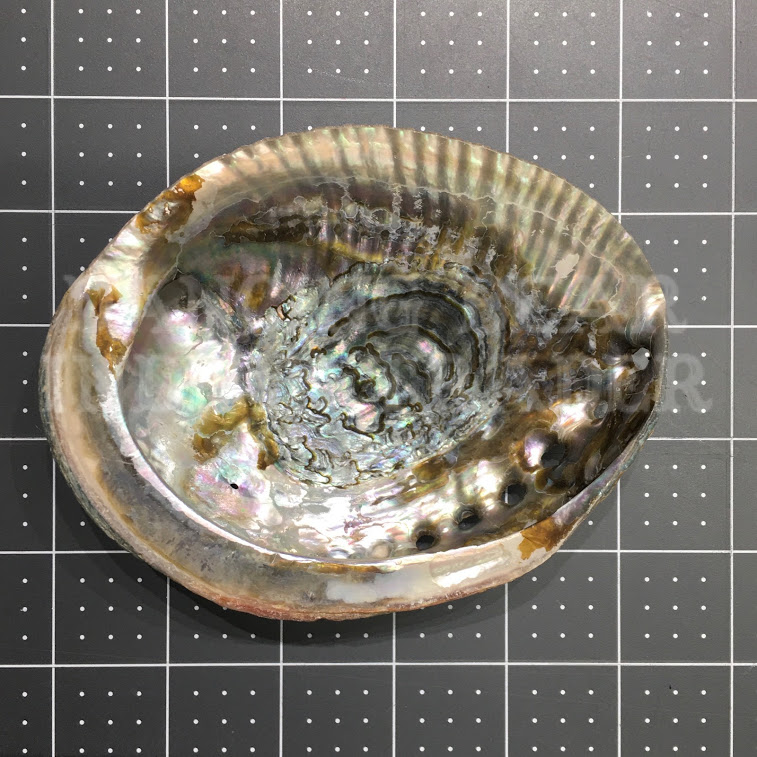 Abalone Shell 4-5, Imported from Philippines