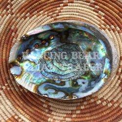 Abalone Whole Shell Green