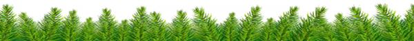 pine border bottom