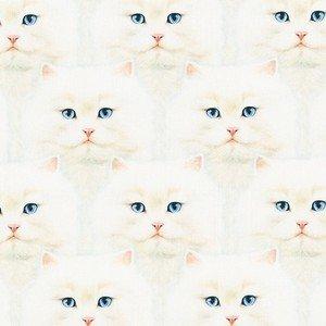 19561 1 White Cats