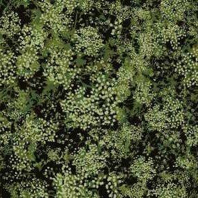 1GSG2 Green Babys Breath