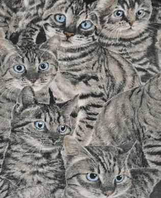 2318 5 Gray Cats