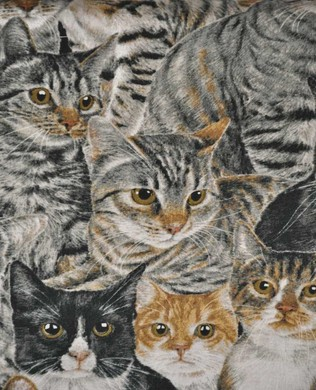 2318 55 Brown Cats