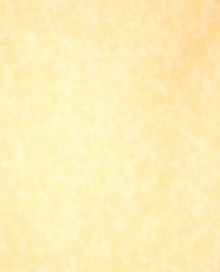 Maize - 9881-17
