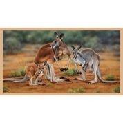 DV3185 Kangaroo