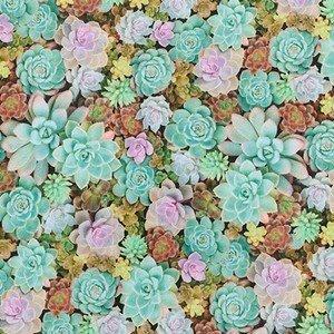 18918 58 Cactus