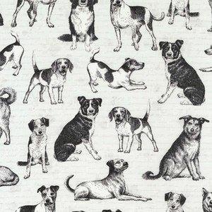 6280 Grey Playful Pups