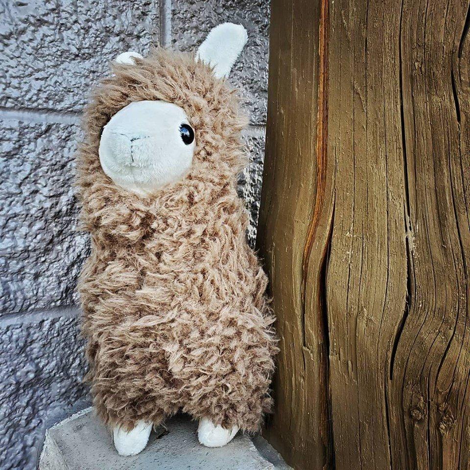 Lloyd Llama Cuddle Kit