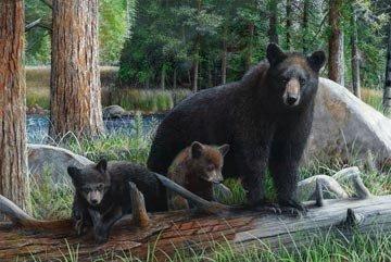 Digital-Black Bear Adventure Panel