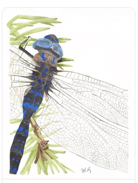Dragonfly Fabric Panel 9 x 12