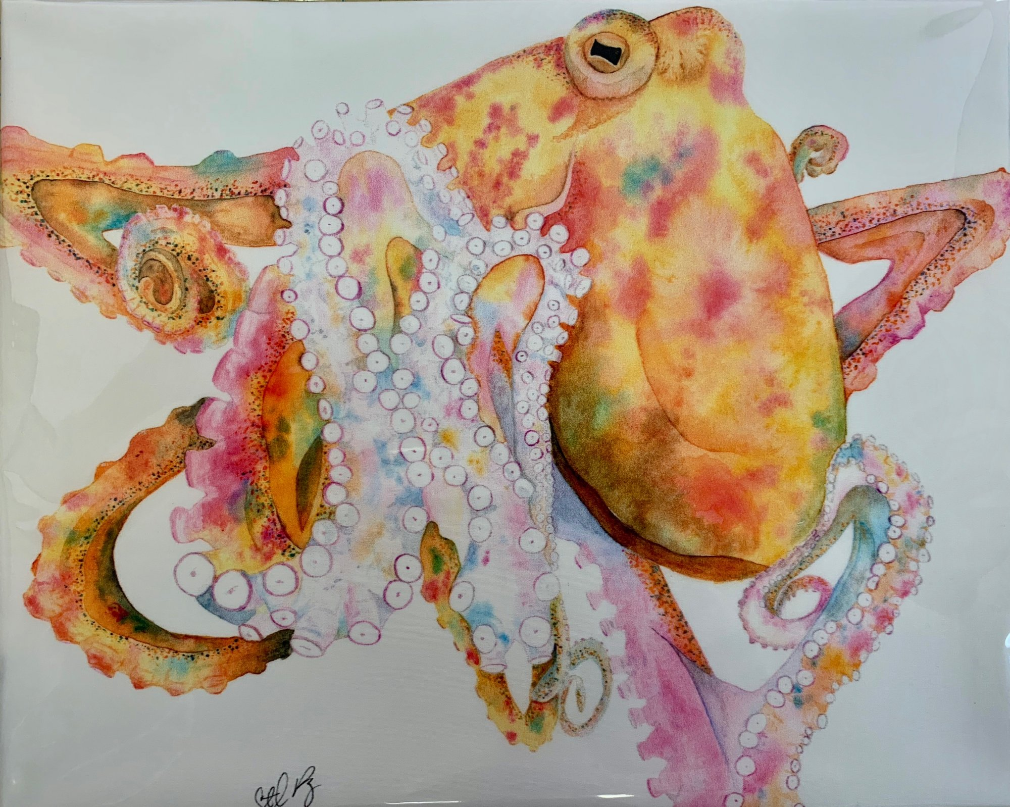 Octopus Panel 13 x 17