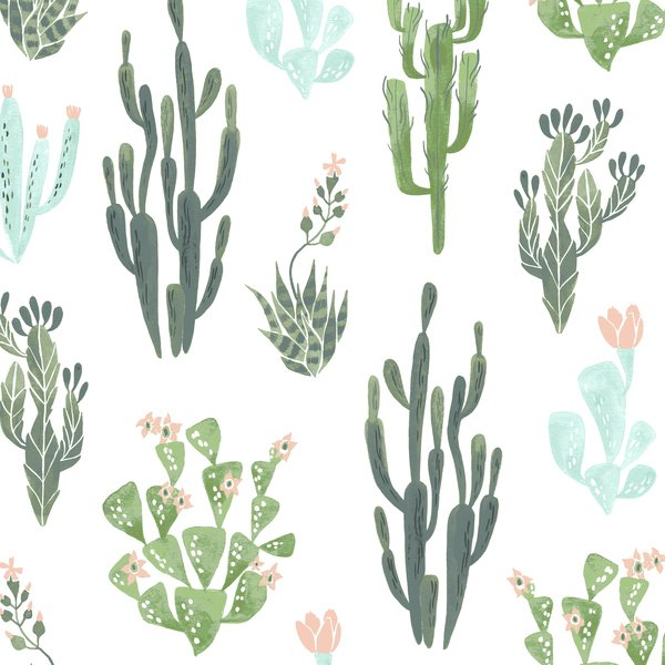 Cacti on White