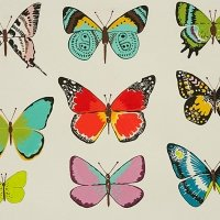 Mariposa Butterflies