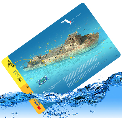 Reef Smart Waterproof  Dive Guide Cards