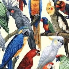 Living Wonders Parrots