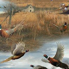 Wild Pheasants Scenic