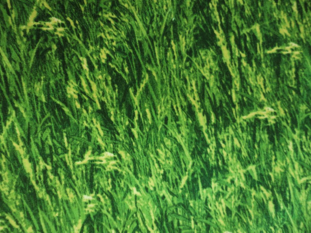 Bear Mountain Grass  60054-60