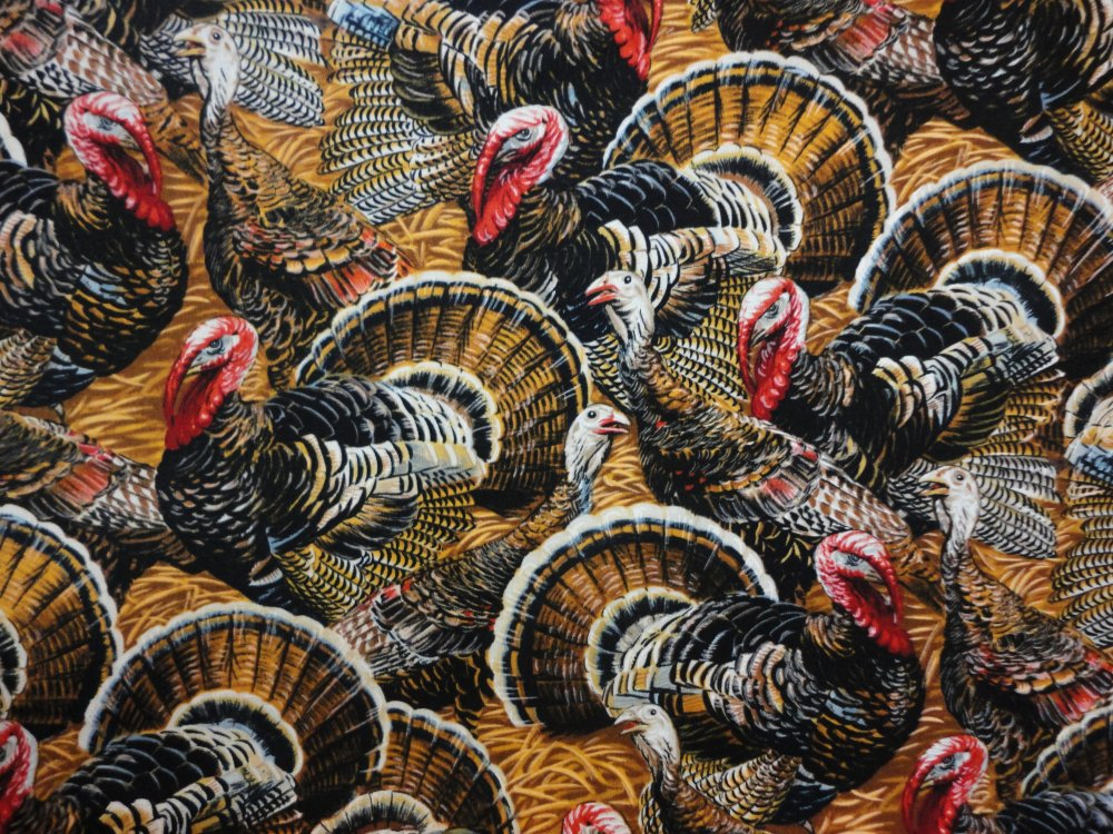 Turkeys   C5258 Natural