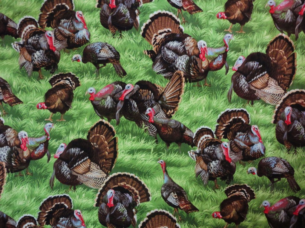 Backyard Bandits Turkey  112-11851