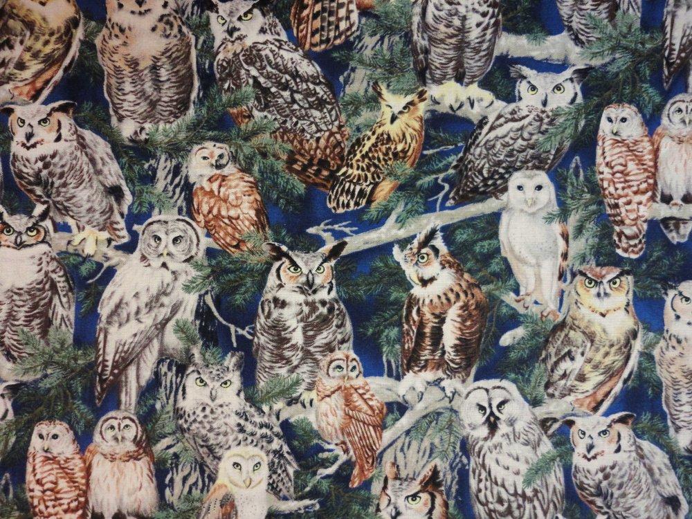 Backyard Bandits Owls  12216-757