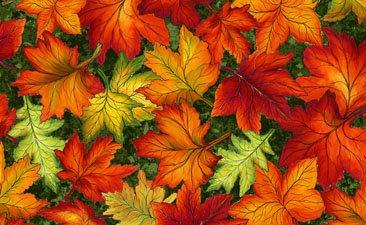 Fall Leaves Multi