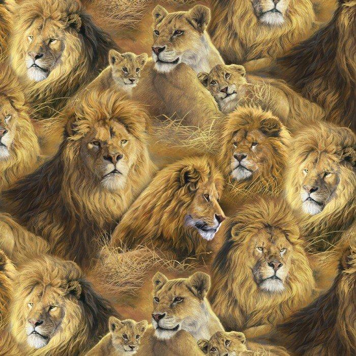 Animal Adventure Lions