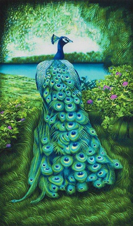 Peacock Elegance 24 Panel
