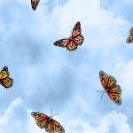 Prairie Gate Butterflies